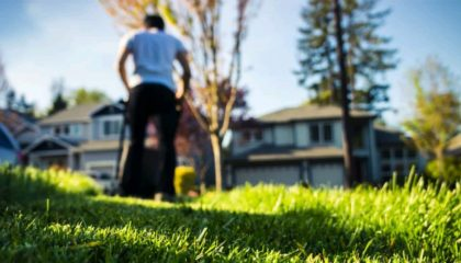 Lawn Cleaning Services Montreal