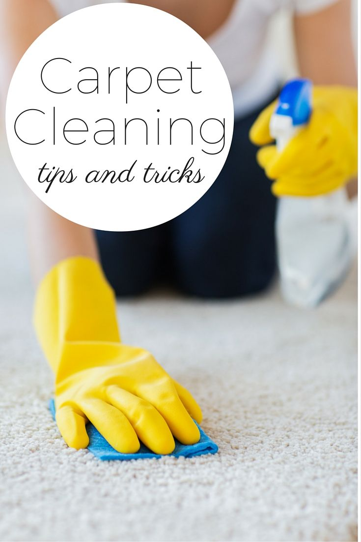 How Do I Clean My Carpets Myself Menage Total Montreal